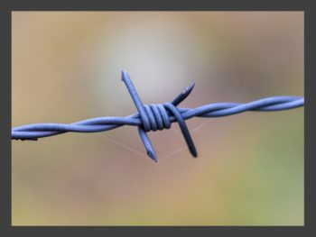 blue barbed wire